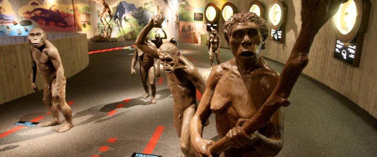Анализ группы крови неандертальцев показал их низкое генетическое разнообразие