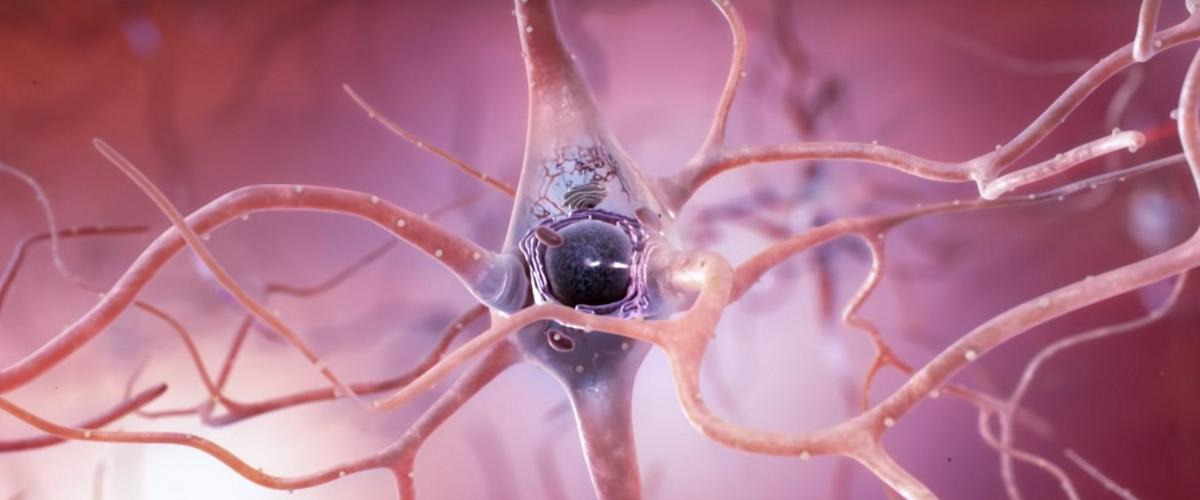 Найдена новая вероятная причина болезни Альцгеймера