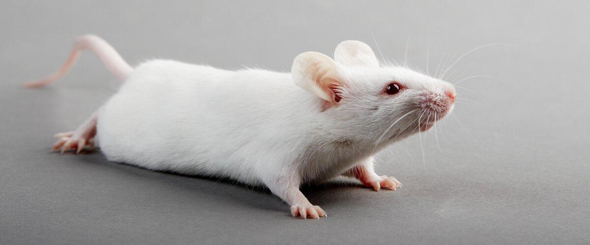 Ученые нашли подтверждение того, что иммунитет влияет на разум